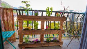 plantes pour decorer jardin