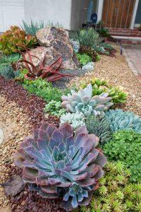 plantes pour decorer son jardin